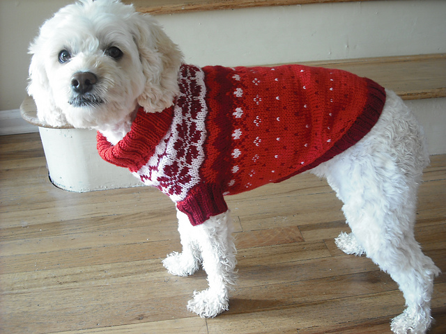 knitted dog coats norwegian dog coat [knit] CDDNQHZ